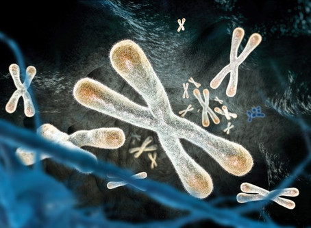 Telomeres - the Long and the Short
