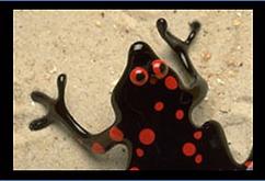 frog header 3in.png
