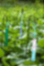 garden3in.jpg