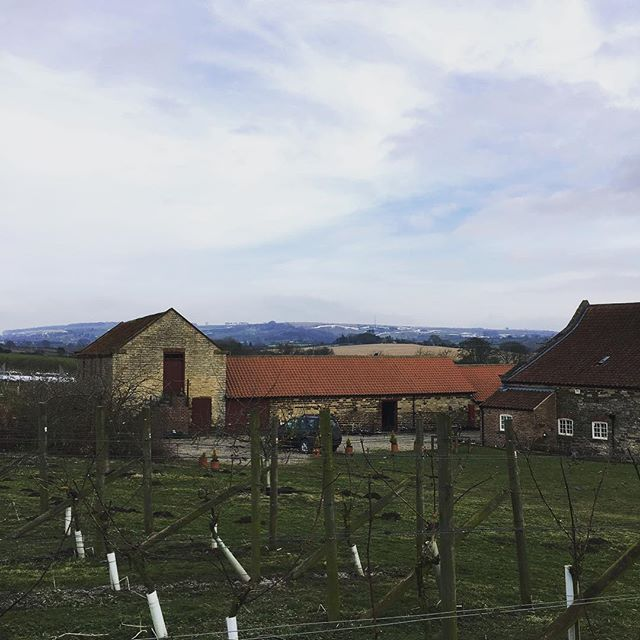 Vineyard February 2018