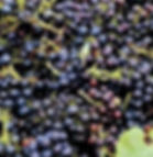 treadinggrapes_edited.jpg