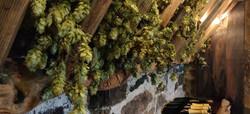 Hops Wine Tasting Room