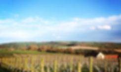 Vines, Westow, North Yorkshire, United Kingdom.