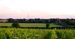 Summer evening Paradise farm 2016