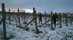 Winter pruning 2016