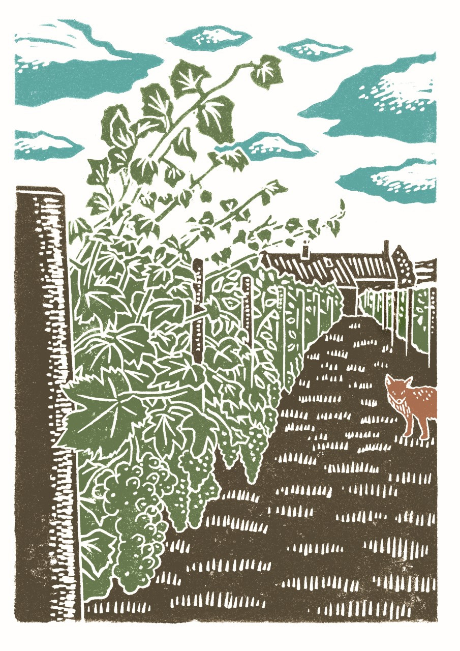 Vineyard Woodcut