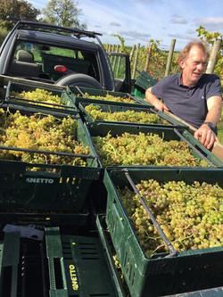 John and Grape Harvest 2017