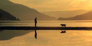 Man and His Dog at Sunset