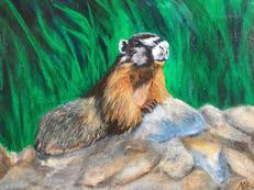 """Marmot"""