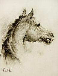 Голова лошади2.jpg