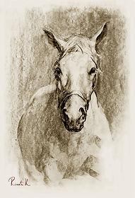 Башкирская лошадь (вид спереди)1а2.jpg