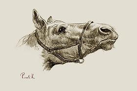 Башкирская лошадь (вид сбоку).jpg