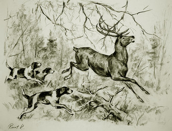 РинатК. Олень и его рога.jpg