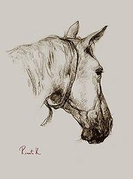 Башкирская лошадь (вид сзади)1а1.jpg