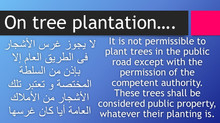 On tree plantation...