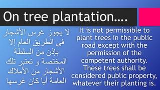 On tree plantation...