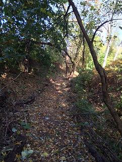 Fall Trail-2.jpg