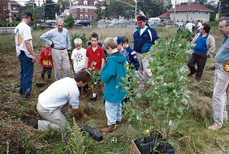 South Ravine - 1995 Tree Planting.jpg
