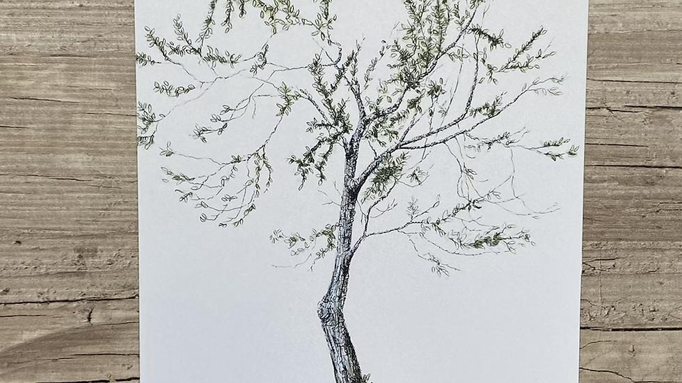 "'Plum Tree' 7""x5"" art print"