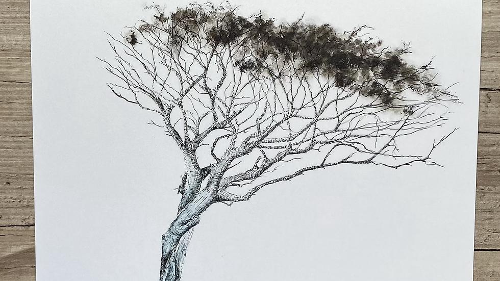 "'Windswept Rowan' 7""x5"" art print"