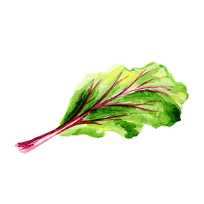 Beetroot 02.png