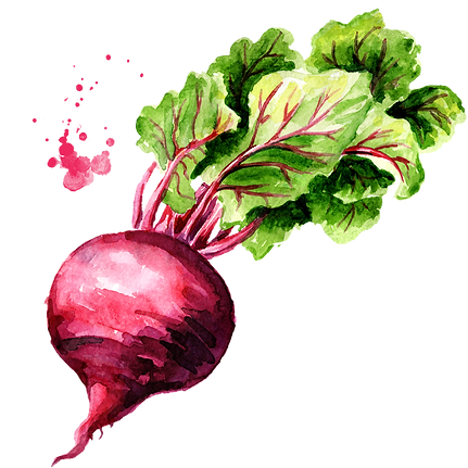 Beetroot 03.png
