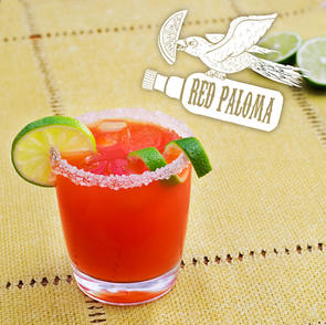 Red Paloma_Illustrated.jpg