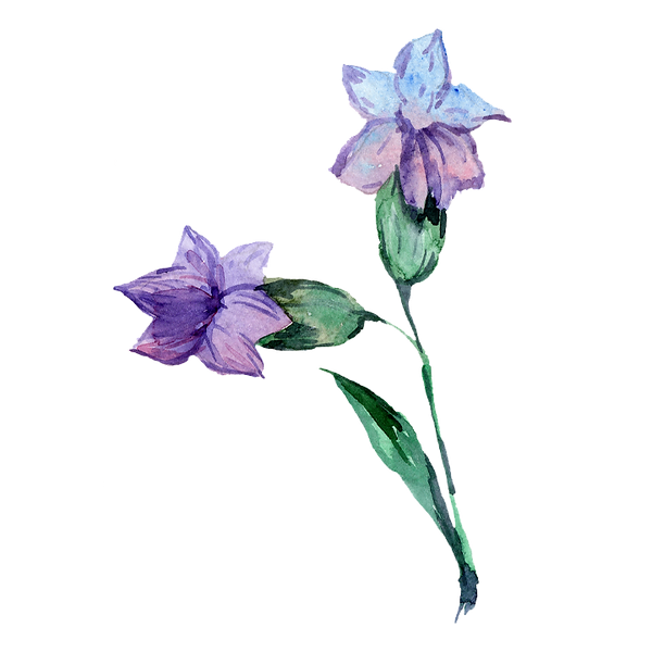 Flower 07.png