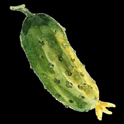 Cucumber 04.png