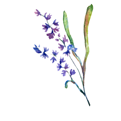 Flower 06.png