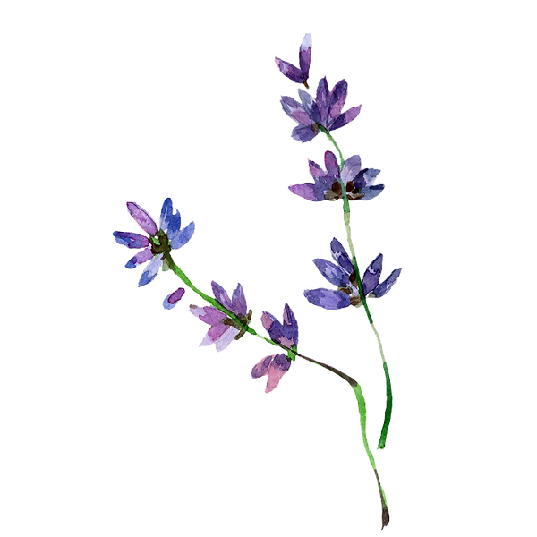 Flower%2001_edited.png