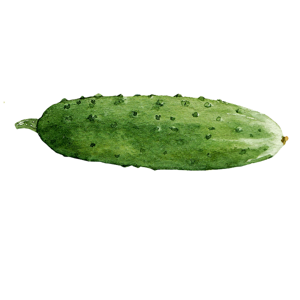 Cucumber 03.png