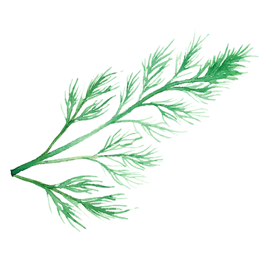 Dill 01.png