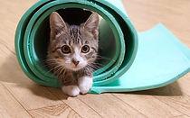 cat-yoga-1-1080x675.jpeg