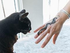 cat and henna.jpg