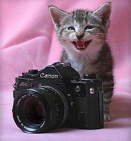 2-camera-funny-cat-photography.jpg