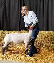 Pauley lamb.jpg