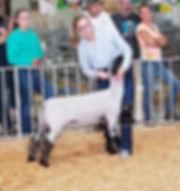 Pauley lamb 3.jpg