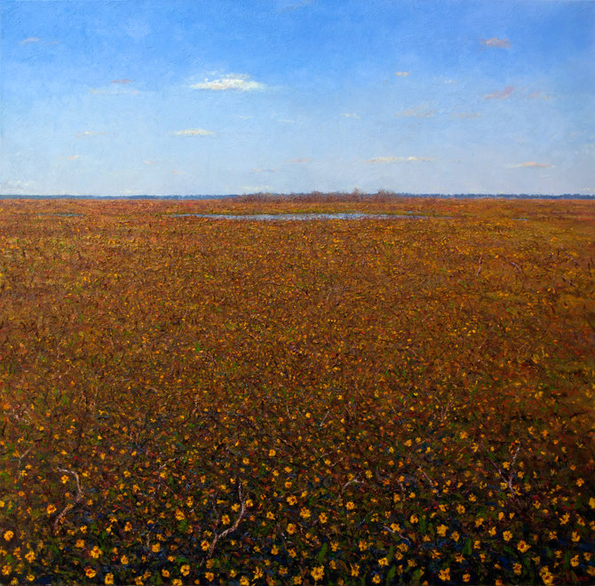 Contemporary oil landscape painting of yellow flowers by contemporary artist and painter Miguel Saludes; inspired by the Paynes Prairie, Gainesville, Florida.