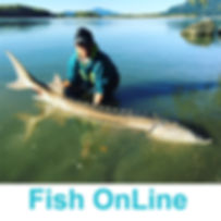 fishonline-profile.jpg