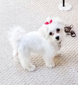 Chloe (Snowflake)