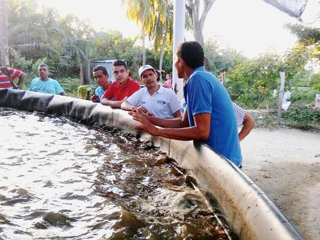 796 familias del Magdalena se favorecen con la siembra de más de 200mil peces