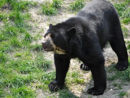 Chucho, el nuevo representante del zoológico de Barranquilla