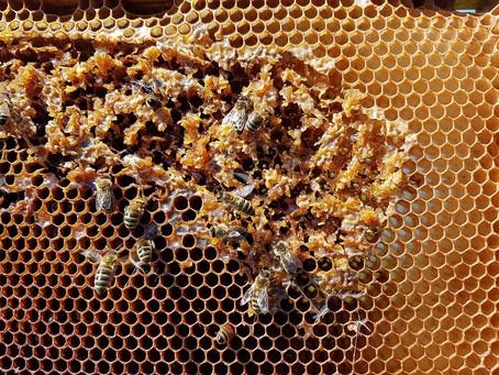 Alcaldía de Tierralta respaldrá a afectados por muerte masiva de abejas