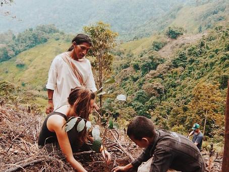 """Sembrar árboles en el """"Corazón de la Tierra"""" para reconectarse"""