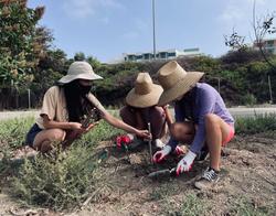 Planting Native Plants