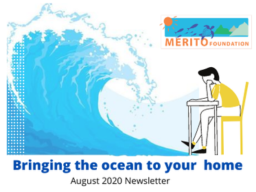 August 2020 Newsletter: Bringing the ocean to your home