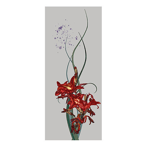 Lily 270mm x 116mm