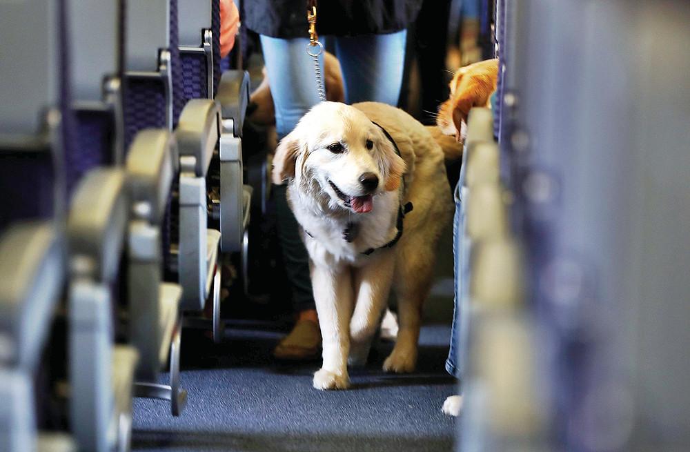Service Animal on Airplane
