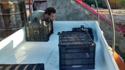 Plant Basket Layout Options